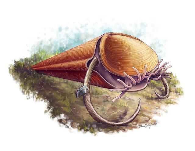 Haplophrentis carinatus reconstruction (Image courtesy Danielle Dufault/ROM)