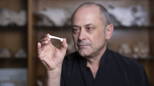 Professor Philip Piper with the first Homo luzonensis bone discovered (Photo courtesy Lannon Harley / ANU. All rights reserved)