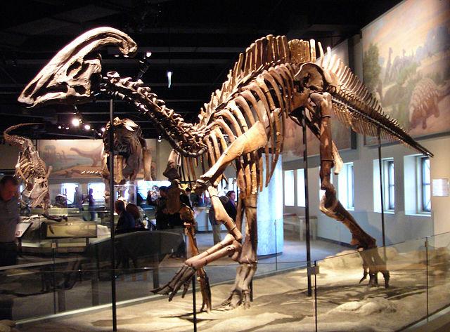 Parasaurolophus cyrtocristatus skeleton
