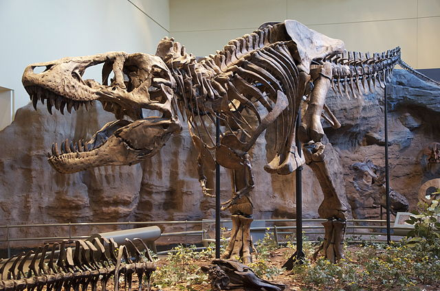 Scheleton of Tyrannosaurus Rex at the Carnegie Museum of Natural History in Pittsburgh