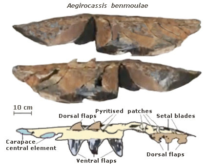 Aegirocassis benmoulai fossil and scheme