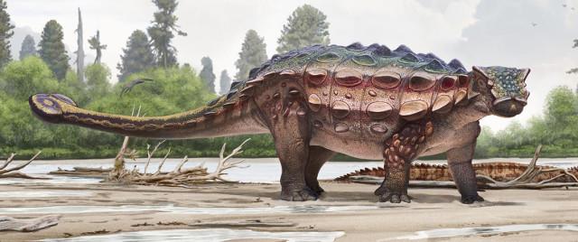 Akainacephalus johnsoni reconstruction