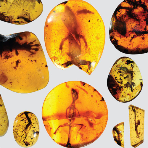 The ancient reptiles trapped in amber (Photo David Grimaldi)