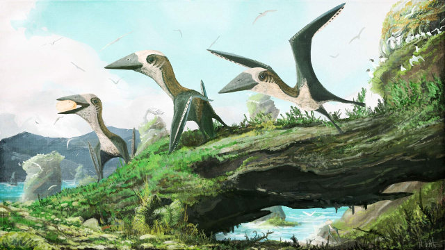 Reconstruction of the Azhdarchid Pterosaur found in Canada (Image courtesy Mark Witton)