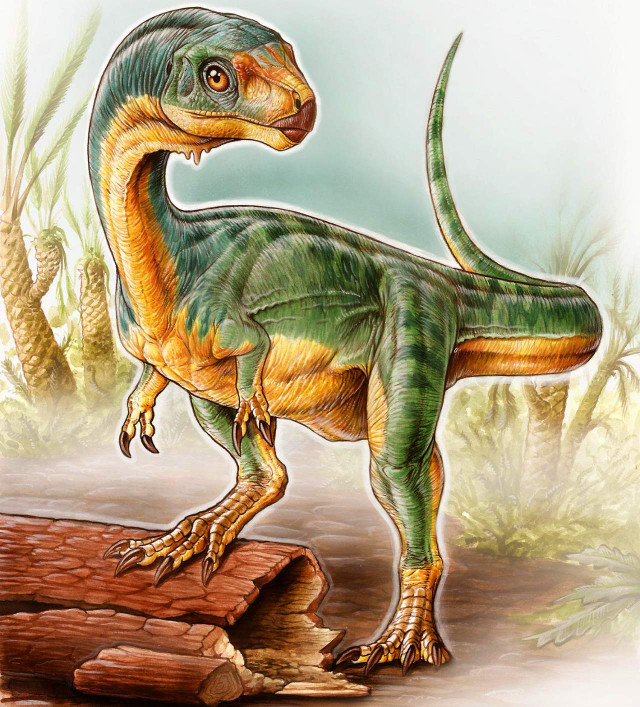 Chilesaurus diegosuarezi reconstruction (Image courtesy Gabriel Lio)