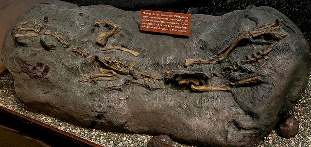 Chilesaurus diegosuarezi specimen