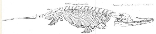 Diagram of the skeletal anatomy of Ichthyosaur communis from 1824