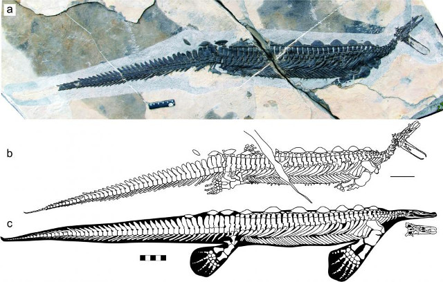 Eretmorhipis carrolldongi is a marine reptile that lived about 250 million years ago and had some similarities with the platypus
