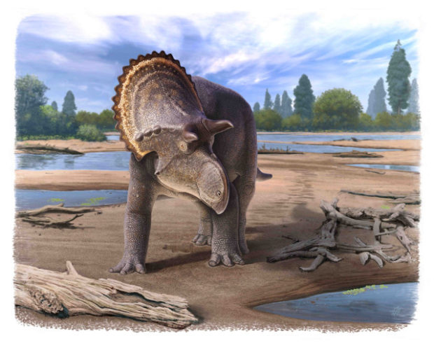 Representation of Nasutoceratops (Image courtesy Cleveland Museum of Natural History)