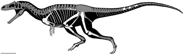 Reconstruction of Gualicho shinyae with the bones found in white (Image Sebastián Apesteguía at al.)