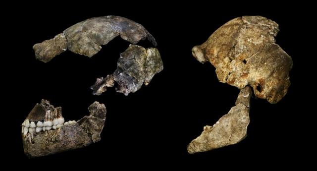 Homo Naledi partial sSkulll (Image courtesy John Hawks. All rights reserved)