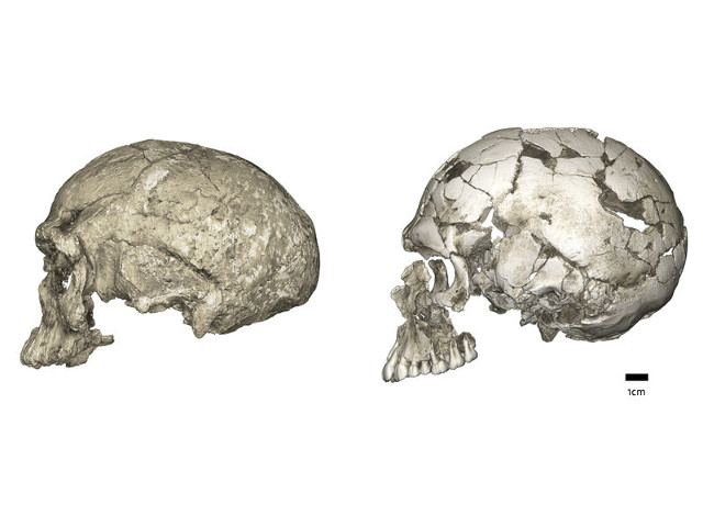 The Jebel Irhoud 1 and Qafzeh 9 skulls