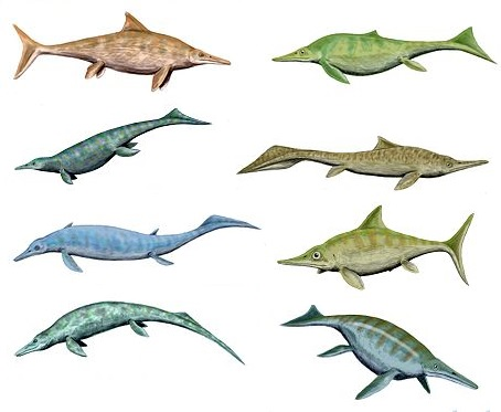 Reconstruction of various ichthyosaurs