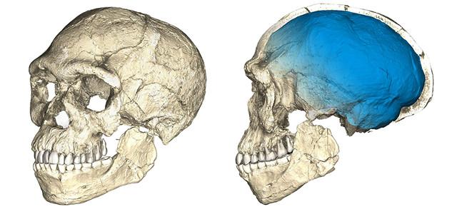 Jebel Irhoud skull's tomographic reconstruction (Image  Philipp Gunz, MPI EVA Leipzig)