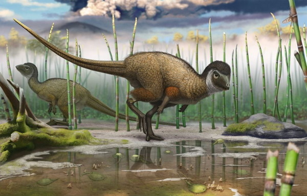 New clues that the origin of plumage goes back to at least 250 million years ago