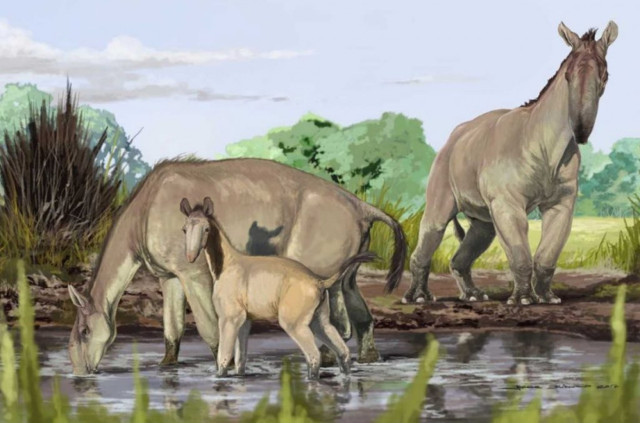 Reconstruction of Macrauchenia Patachonica (Image courtesy Jorge Blanco/American Museum of Natural History)