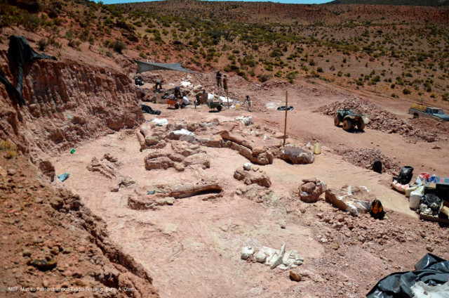 The digging of Patagotitan mayorum's bones (Photo courtesy Museo Egidio Feruglio)