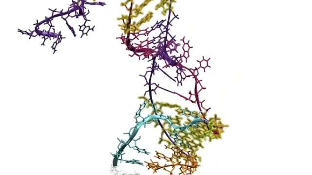 A moment of the RNA folding process (Image courtesy Lucks et al. All rights reserved)