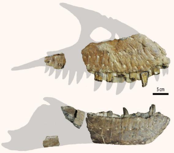 Thanatotheristes degrootorum fossil bones