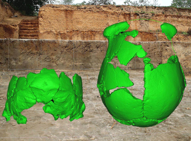 Virtual reconstruction of the two skulls found in China (Image courtesy Xiujie Wu)