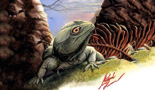 Artist's concept of Colobops noviportensis (Image courtesy Michael Hanson / Yale)