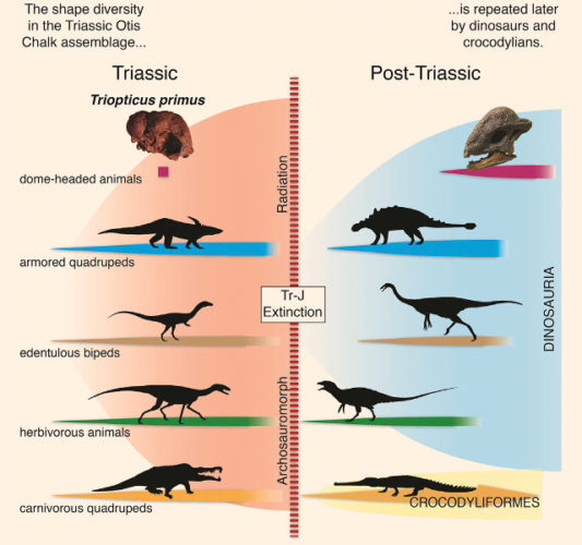 Convergence between ancient reptiles and dinosaurs (Image courtesy Michelle Stocker et al.)