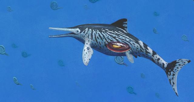 Ichthyosaurus somersetensis reconstruction (Image courtesy Joschua Knuppe)