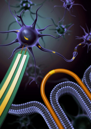 Artist's concept of a nanoprobe connecting to a neuron (Image courtesy Lieber Group, Harvard University. All rights reserved)