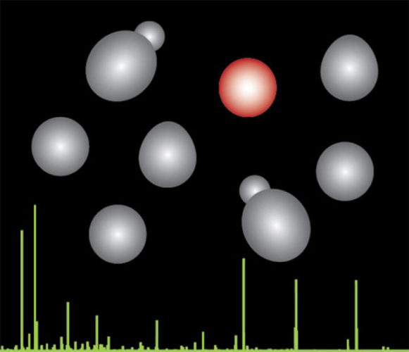 Evolution in yeast species (grey and red) with mass spectrometry in green (Image courtesy Villen Lab/University of Washington)