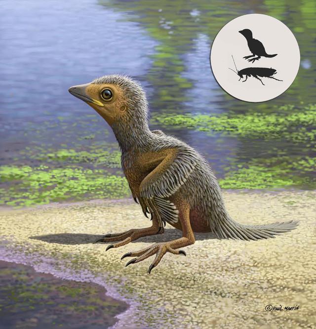 The chick's reconstruction (Image Raúl Martín)