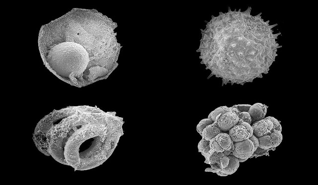 Some microfossils from the Khesen Formation (Image courtesy Yale University)