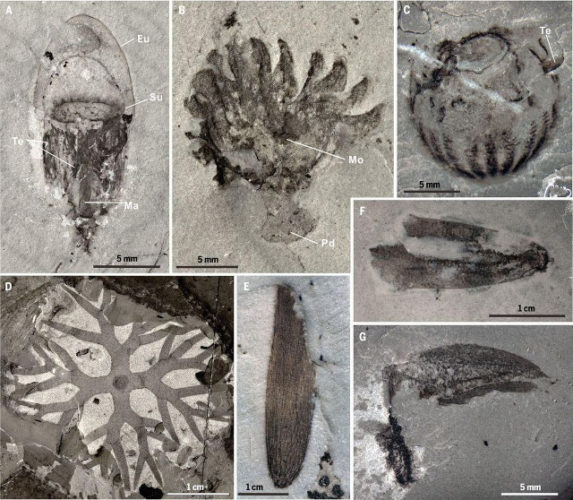 A new, extraordinarily conserved half-billion-year-old fossil deposit, was discovered in China