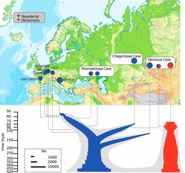 Neanderthal relationships tree