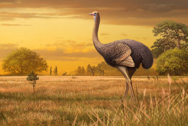 Artist's concept of Pachystruthio dmanisensis in its environment (Image Andrey Atuchin)