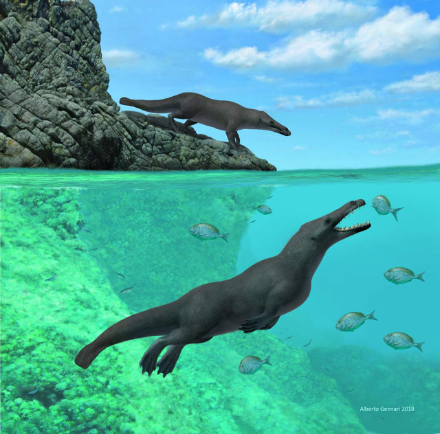 Reconstruction of Peregocetus pacificus on land and in the sea (Image courtesy A. Gennari)