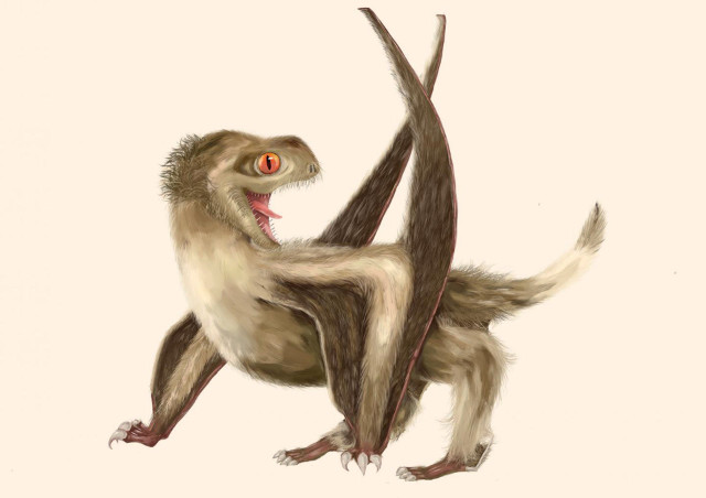 Reconstruction of eathered Pterosaur (Image courtesy Yuan Zhang. All rights reserved)