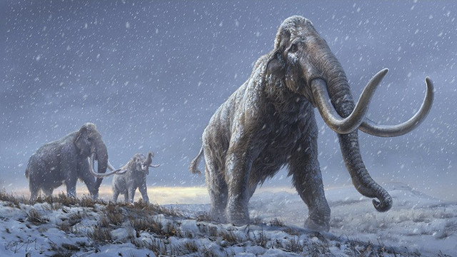 Artist's reconstruction of the steppe mammoth (Image courtesy Beth Zaiken / Centre for Palaeogenetics)