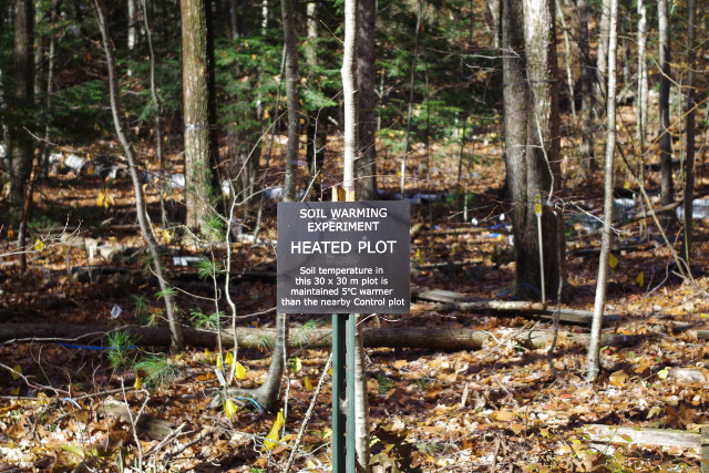 One of the heated plots at the Harvard Forest (Photo courtesy Jeff Blanchard. All rights reserved)